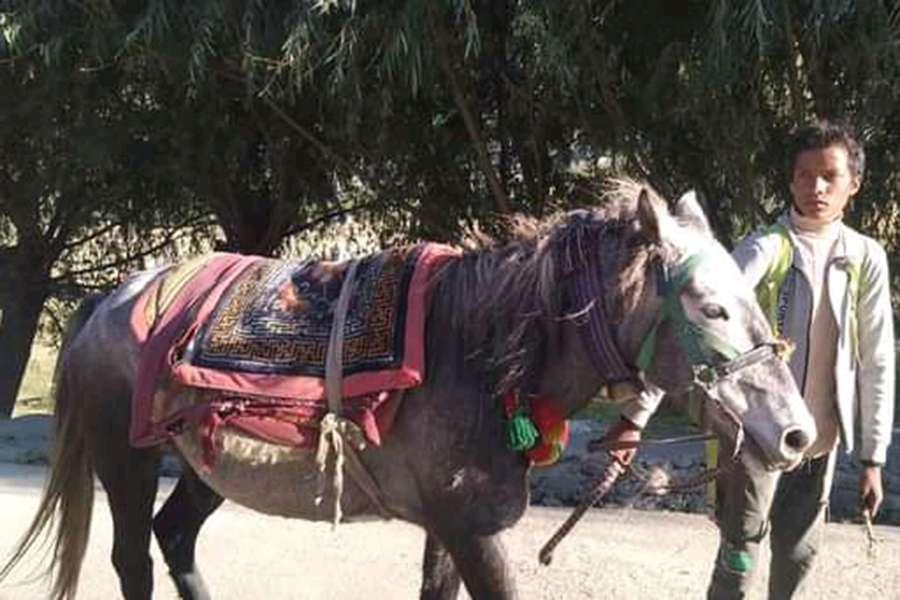 जुम्ली घोडाको महत्त्व प्रवर्द्धनका लागि घोडा दौड हुदै